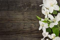 Blomning för våräppleträd på lantlig träbakgrund med utrymme Royaltyfria Bilder
