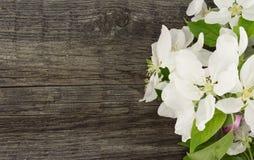 Blomning för våräppleträd på lantlig träbakgrund med utrymme Royaltyfri Bild