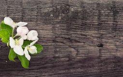Blomning för våräppleträd på lantlig träbakgrund med utrymme Arkivfoto