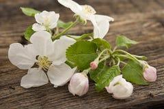 Blomning för våräppleträd på lantlig träbakgrund Moder Royaltyfri Fotografi