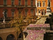 Blomning i bolognaen Royaltyfria Bilder