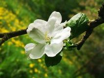 Blomning i den gamla trädgården fotografering för bildbyråer