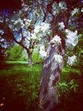 Blomning i den gamla tr?dg?rden fotografering för bildbyråer