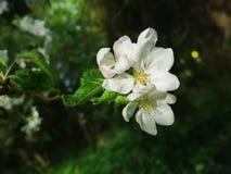 Blomning i den gamla tr?dg?rden royaltyfri foto