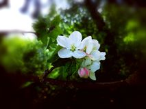 Blomning i den gamla tr?dg?rden arkivbilder
