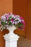 Blomning i en vit blomkruka Royaltyfria Foton