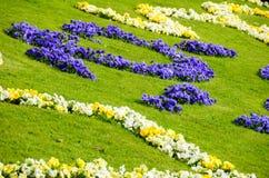 Blomning i gardent Arkivfoto