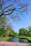 Blomning i Thailand Royaltyfria Bilder