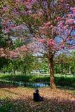 Blomning i Thailand Arkivbilder
