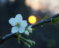 Blomning och solnedgång arkivbild