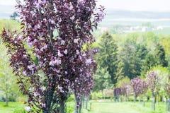 blomning på trädträdgård Arkivfoto