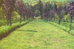 blomning på trädträdgård Royaltyfria Bilder