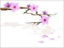 blomning sakura Vektor Illustrationer