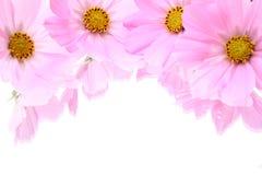 blomningar Arkivbilder