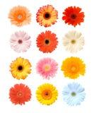 blomningar Royaltyfri Illustrationer
