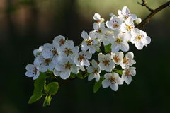 blomningar Royaltyfria Foton