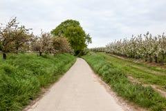 Blomningar av fruktträd på vägen Arkivfoton