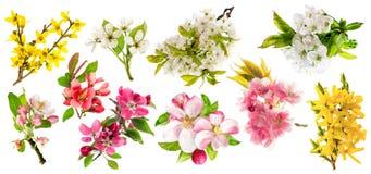 Blomningar av äppleträdet, körsbär fattar, päronet, forsythia Uppsättning av spr Arkivbilder