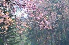 Blomningar för blommavårrosa färger Arkivfoton