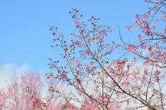 Blomningar för blommavårrosa färger Arkivbild