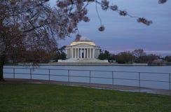 Blomningar för körsbärsrött träd inramar Jefferson Memorial i Washington DC på soluppgång Royaltyfri Fotografi
