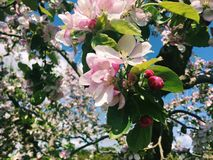 Blomningar i blom Arkivbild