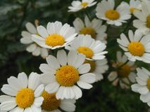 Blomningar kronblad, blommor, orkidér, natur arkivbild