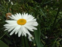 Blomningar kronblad, blommor, orkidér, natur royaltyfria foton