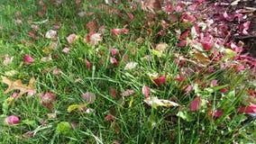 Blomningar som utgjuter till gräset Arkivbild
