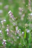 Blomningbakgrund royaltyfri fotografi
