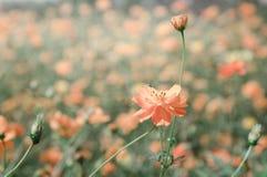 Blomningbakgrund härligt Fotografering för Bildbyråer