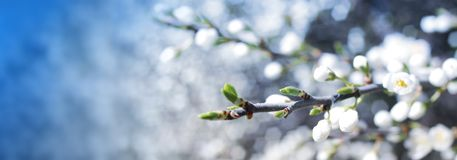 Blomningbaner fotografering för bildbyråer