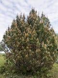 Blomningberget sörjer Arkivbilder