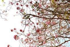 Blomningblomma arkivfoto
