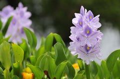 Blomningblomma. Fotografering för Bildbyråer