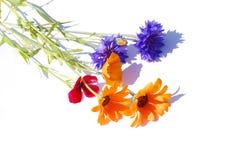 blomningblomma Arkivfoton