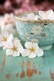 blomningblommaspringtime Royaltyfri Fotografi