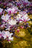 blomningblommor Royaltyfri Foto