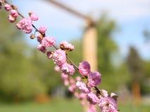 Blomningbuskar stock video