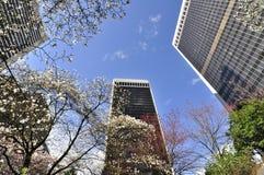 blomningCherry i stadens centrum vancouver Arkivfoton