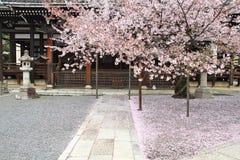 blomningCherry japan Arkivbild