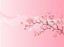 blomningCherryjapan vektor illustrationer