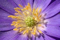 blomningdetalj Arkivfoto