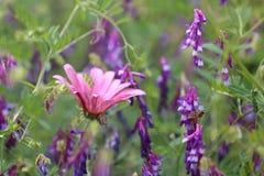 Blomningen Fotografering för Bildbyråer
