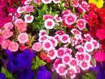 Blomningen blomma, blommar Arkivfoton