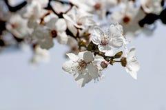 blomningen blommar fjädern Arkivfoton