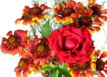blomningen blommar red steg Royaltyfria Foton
