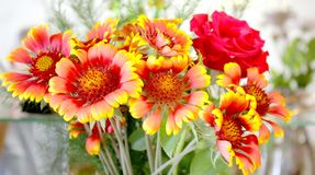 blomningen blommar red steg Arkivfoton