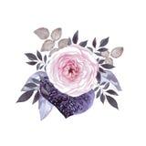 blomningen steg vektor illustrationer