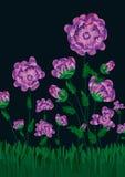 blomningeps-fältet blommar natt Arkivbilder